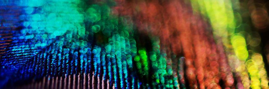 Lisa Knechtel Photograph - Circles Of Confusion by Lisa Knechtel