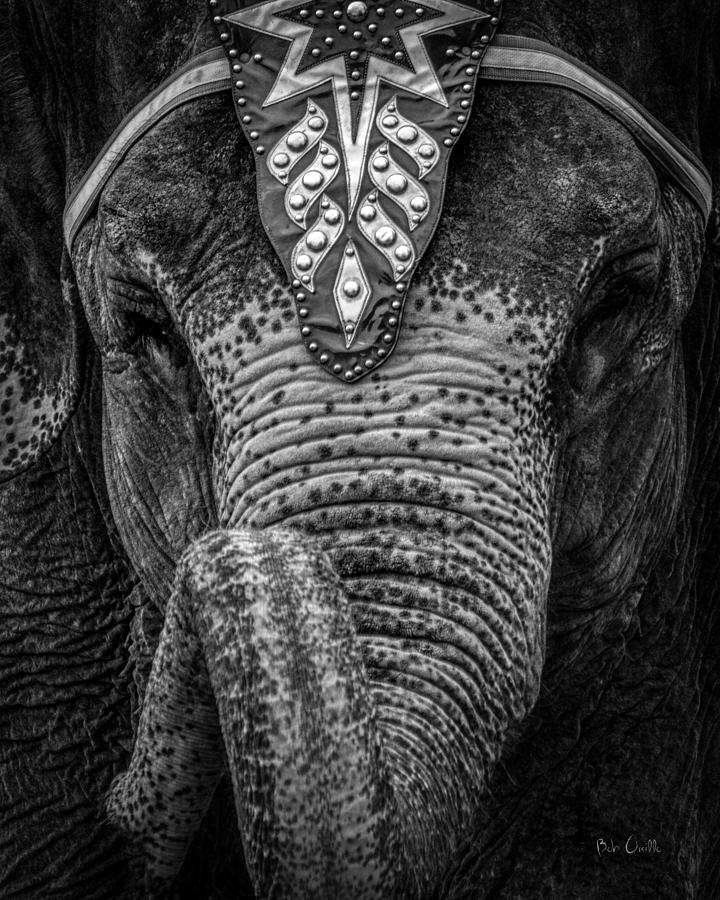 Circus Elephant Photograph By Bob Orsillo