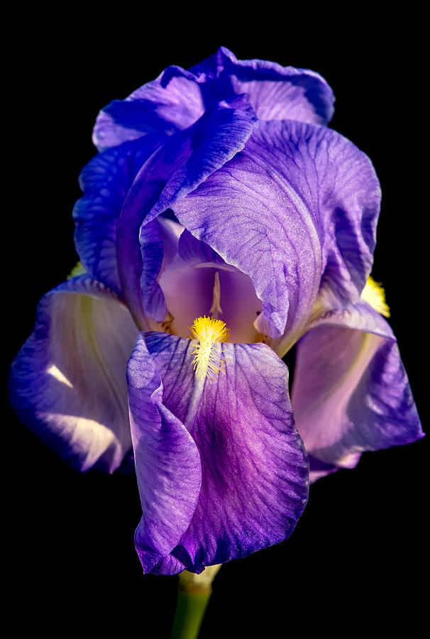 Iris Photograph - Cirrus Beauty 3 by Tomasz Dziubinski