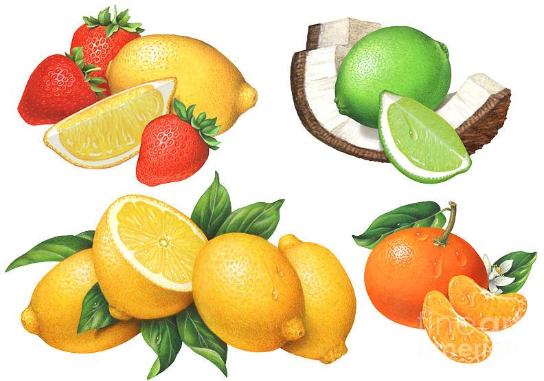 Citrus Painting - Citrus Illustrations #2 by Douglas Schneider