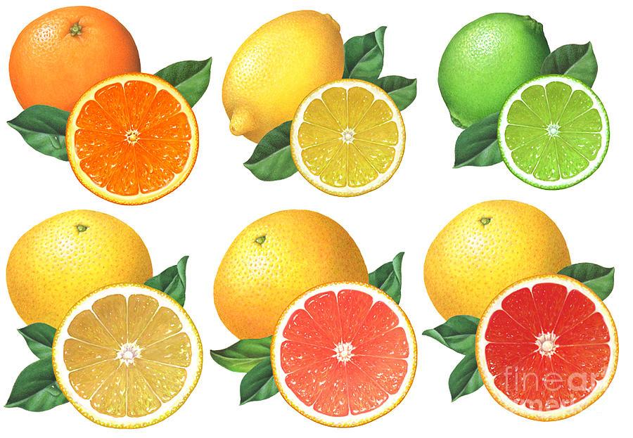 Orange Painting - Citrus Illustrations by Douglas Schneider