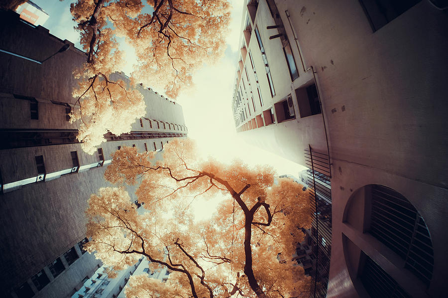 City In Harmony With Nature Photograph by D3sign