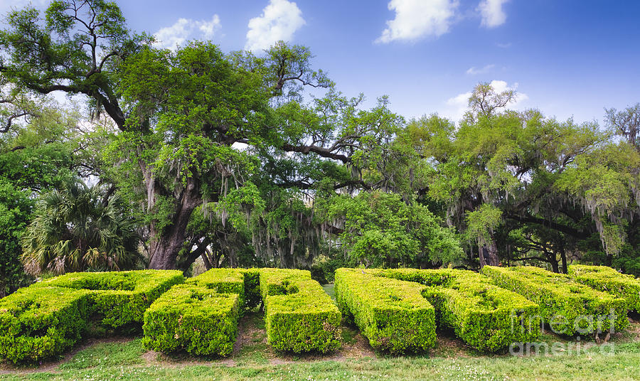 City Park Photograph - City Park New Orleans Louisiana by Kathleen K Parker
