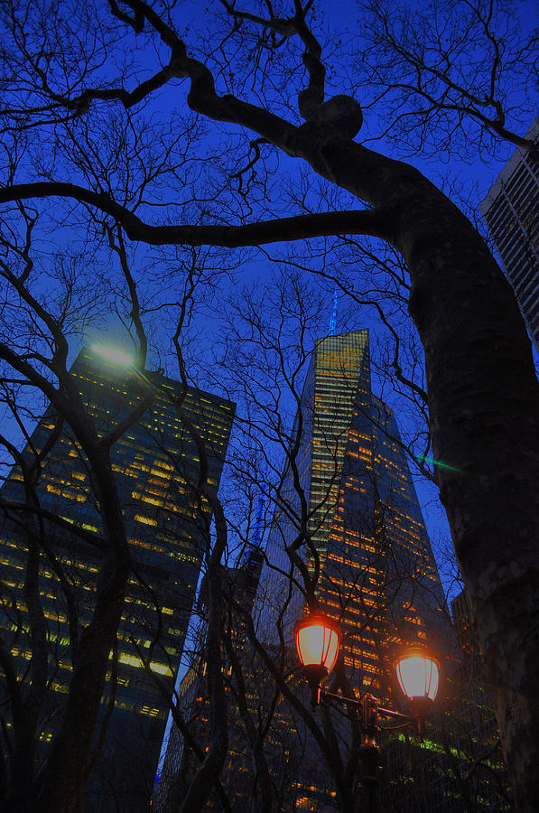 New York City Photograph - City Tree by Emily Stauring