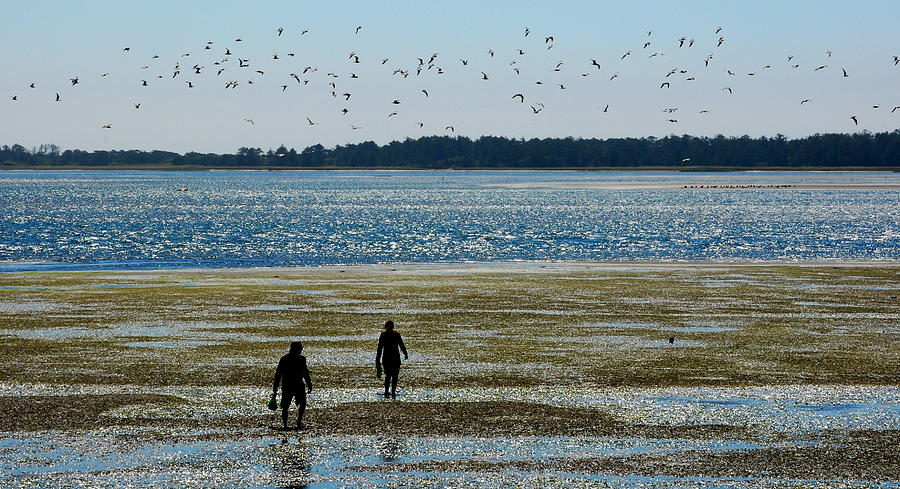 Seascape Photograph - Clammers by Mamie Gunning