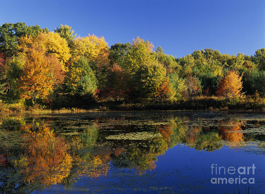 Fall Photograph - Clark Pond - Auburn New Hampshire  by Erin Paul Donovan