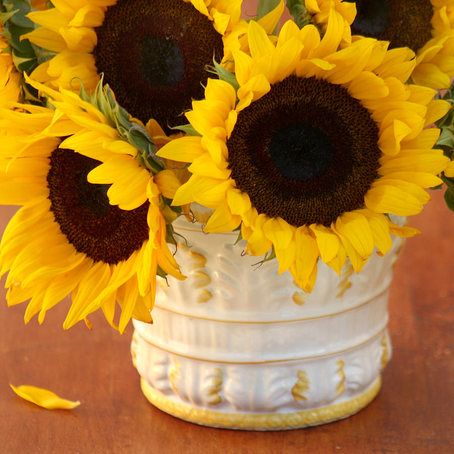 Sunflower Photograph - Classic Sunflowers by Art Block Collections