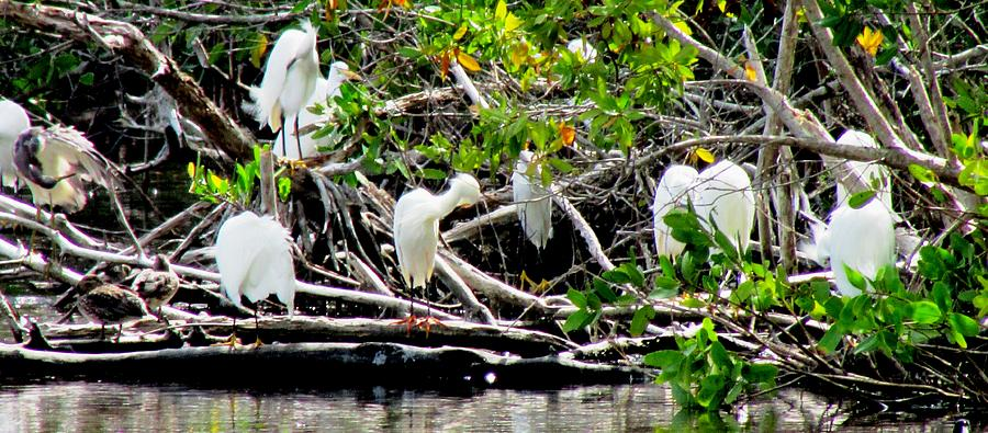 Egrets Photograph - Cleaning Time by Will Boutin Photos
