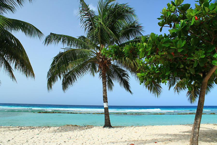 Barbados Photograph - Clear Blue Ocean by Catie Canetti