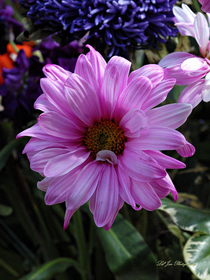Floral Photograph - Clearly Pink by Jeanette C Landstrom