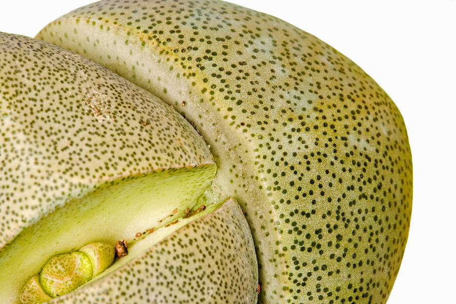 Pleiospilos Nelii Photograph - Cleft Stone by Power And Syred