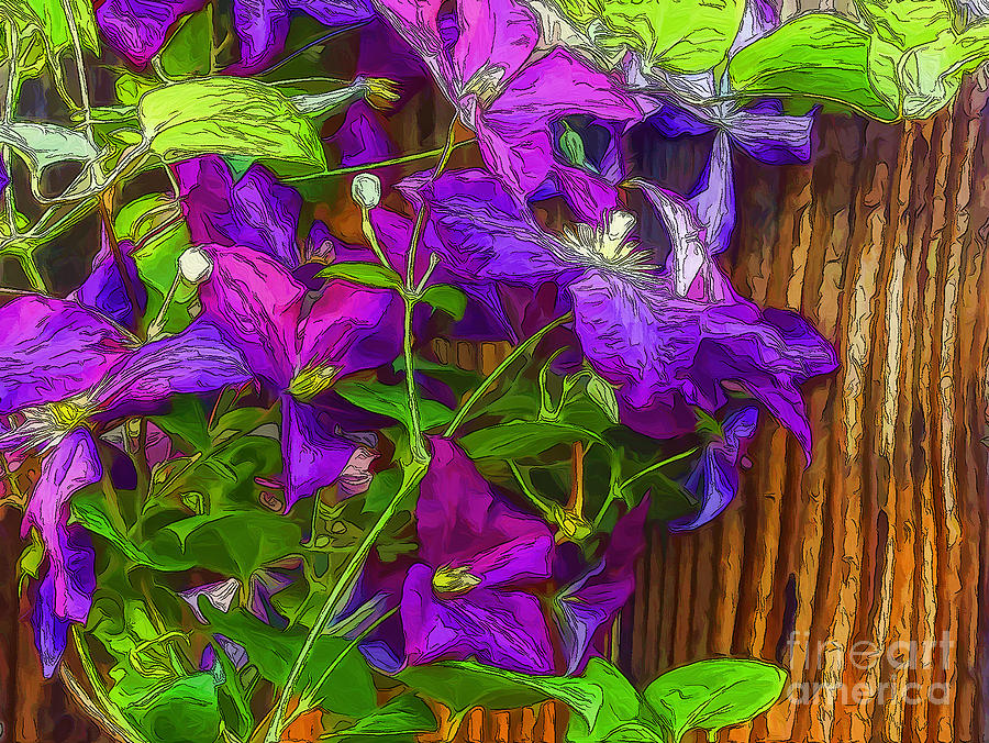 Clematis Photograph - Clematis On The Fence-2014 by Nancy Marie Ricketts