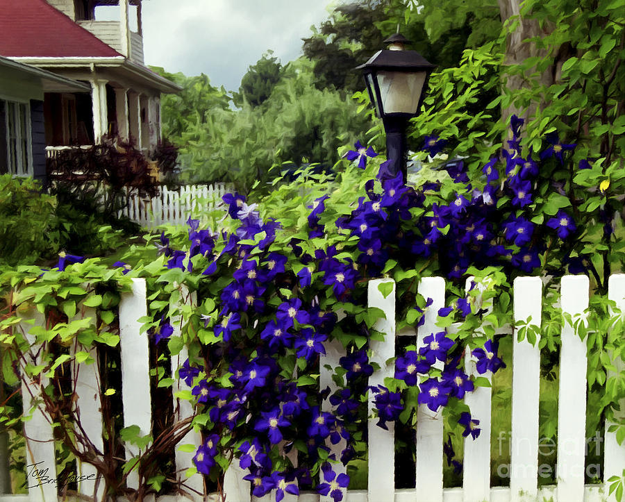Clematis on White Picket Fence painting effect by Tom Brickhouse