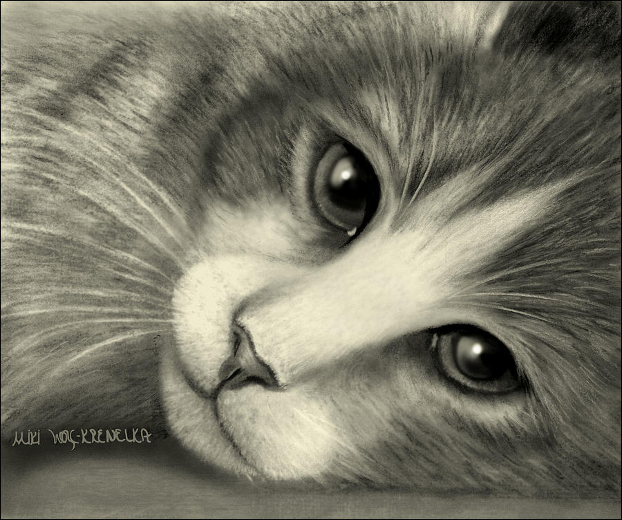 Cat Drawing - Cleo by Miki Krenelka