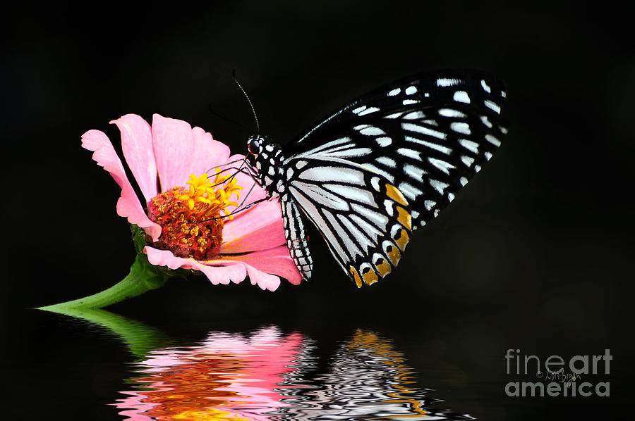 Butterfly Photograph - Cliche by Lois Bryan
