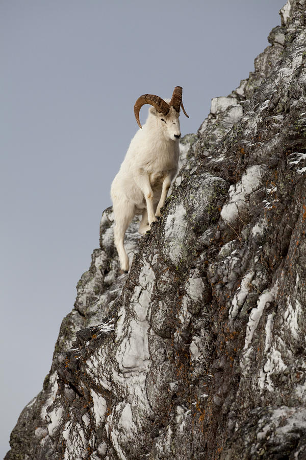 Dall Photograph - Climbing An Icy Cliff by Tim Grams