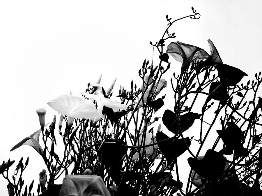 Flowers Photograph - Climbing Forever by Camille Lopez