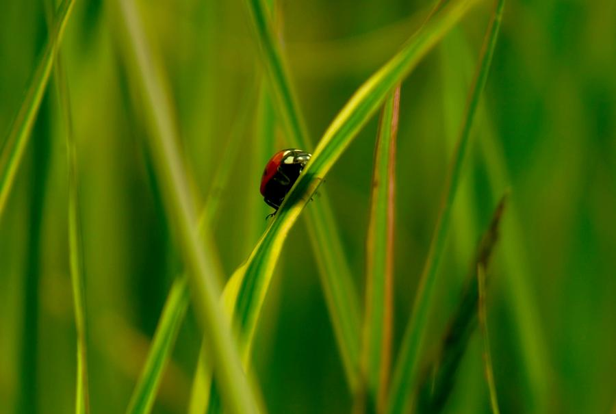 Ladybugs Photograph - Climbing Up The Long Green Road by Jeff Swan