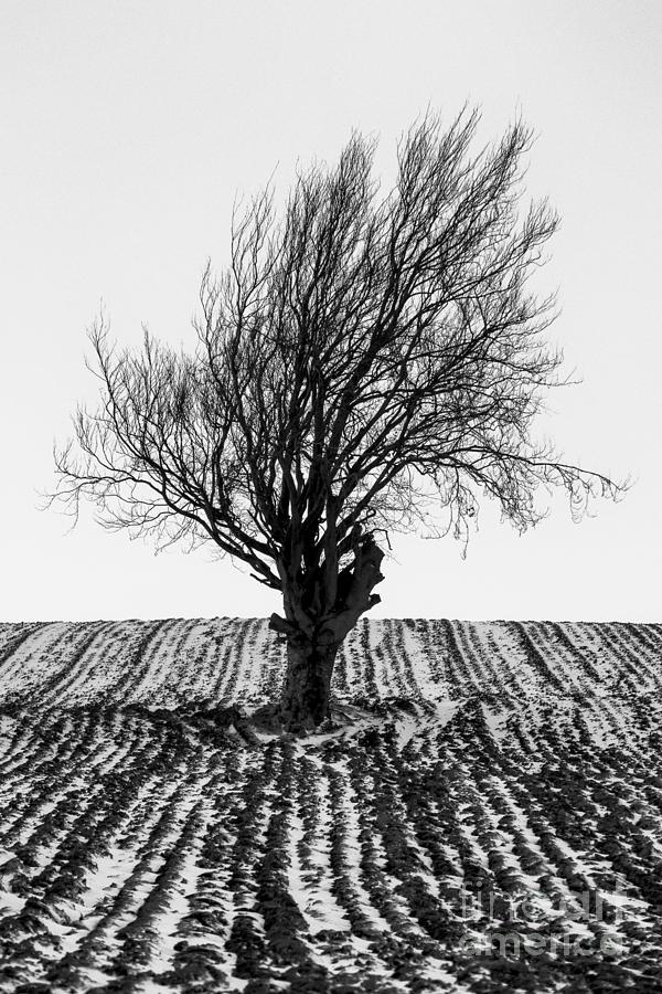 Snow Photograph - Close Tree In Snow by John Farnan