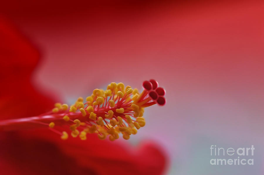 Flower Photograph - Close up flower 1 by Dan Friend
