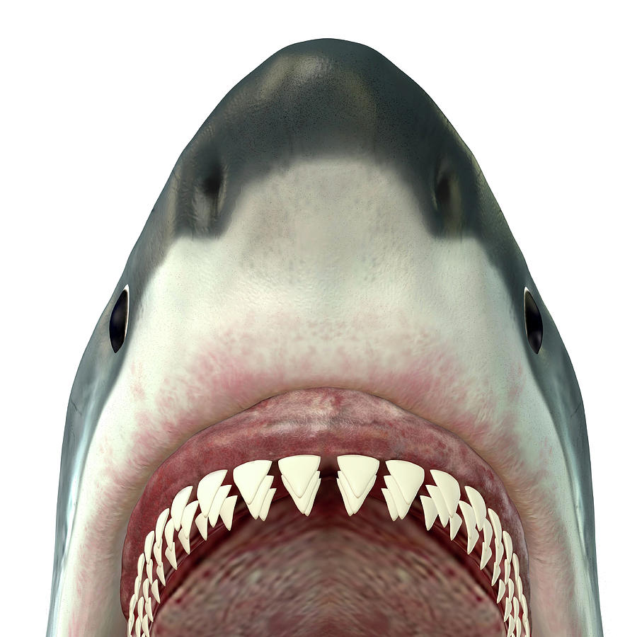 Close-up Of A Great White Shark Digital Art by Corey Ford/stocktrek Images