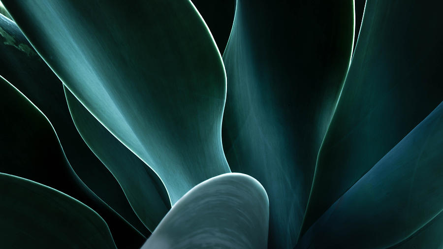 Close-up of an agave plant, America, USA Photograph by Shutterjack