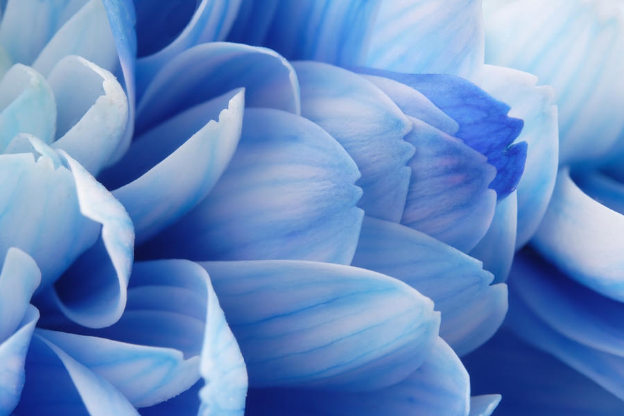 Close-up of Blue Flower Petals Photograph by Anzeletti
