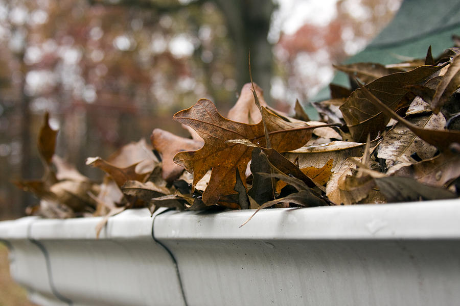 Close-up of dead leaves overflowing a gutter Photograph by Photogress