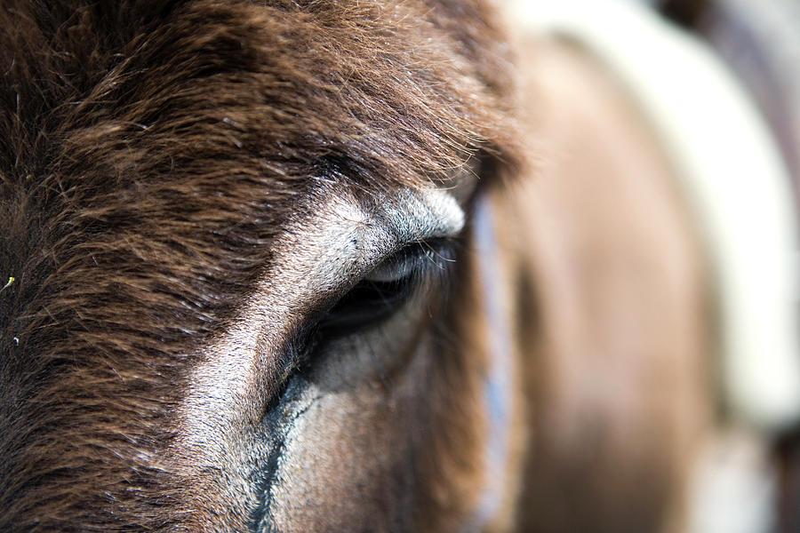 Close-up Of Donkey Eye Photograph by Holger Leue