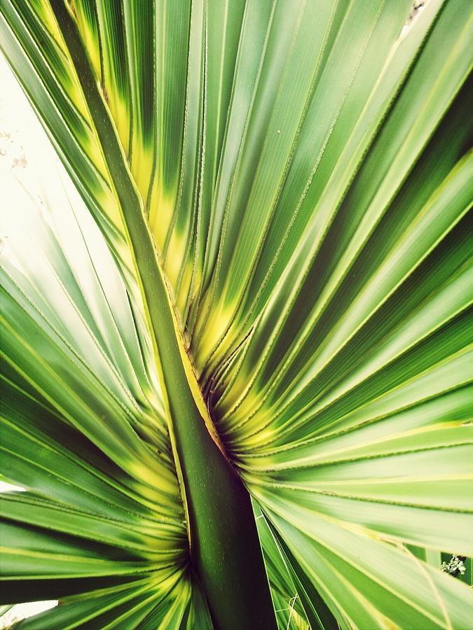 Close-up Of Palm Leaf Photograph by Marianne Wurtele / Eyeem