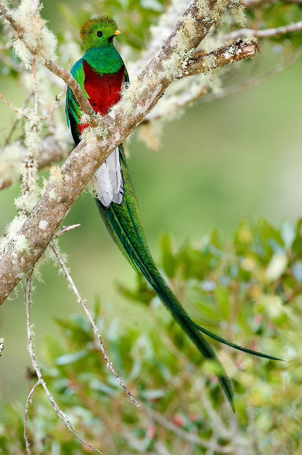 Color Image Photograph - Close-up Of Resplendent Quetzal by Panoramic Images