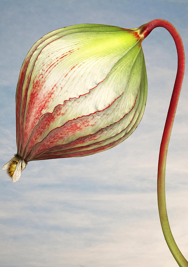 Close up of triffid flower Photograph by Matt Walford