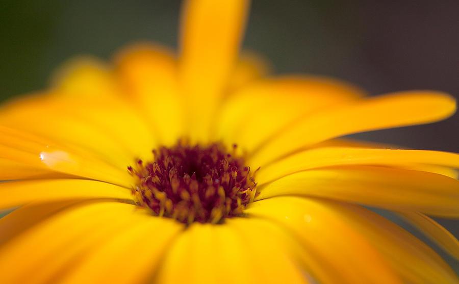 Close-Up Of Yellow Flower Photograph by Paulien Tabak / EyeEm