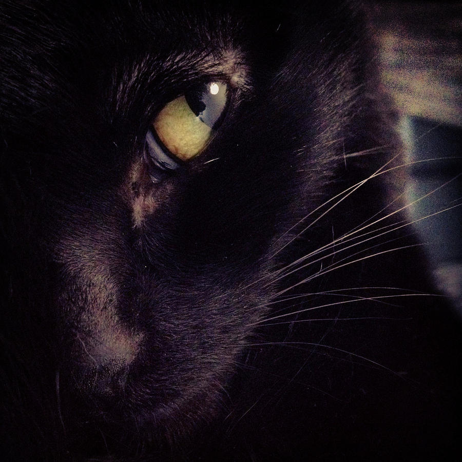 Close Up Portrait Of Beautiful Black Cat Photograph By Nano Calvo