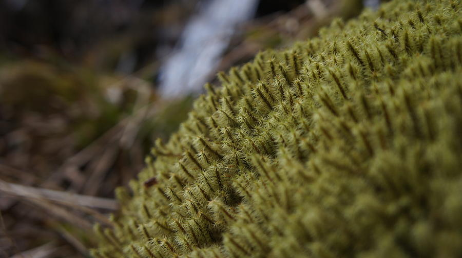 Flora Photograph - Close Up by Riley Handforth