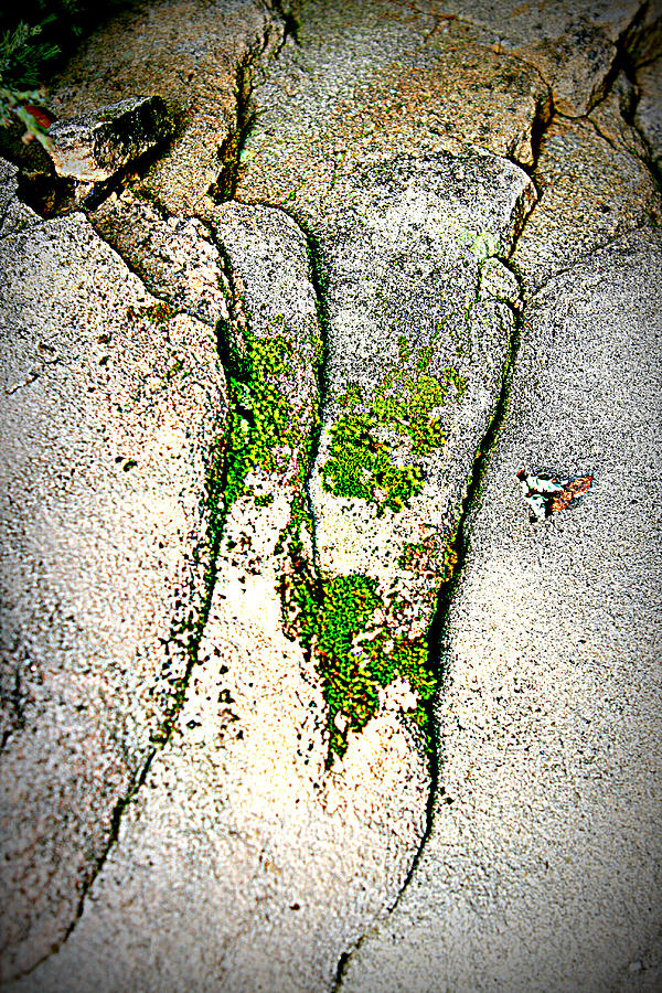 Stone Photograph - Closely by Debbie Sikes