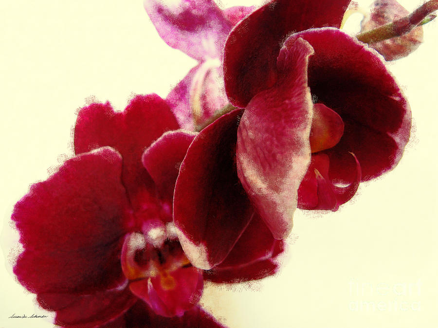 Closeup of Flowering Burgundy Orchid by Susan Schroeder