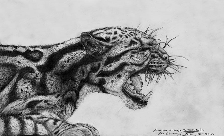 Clouded Leopard Drawing - Clouded Leopard Theatened. by Ian Cuming