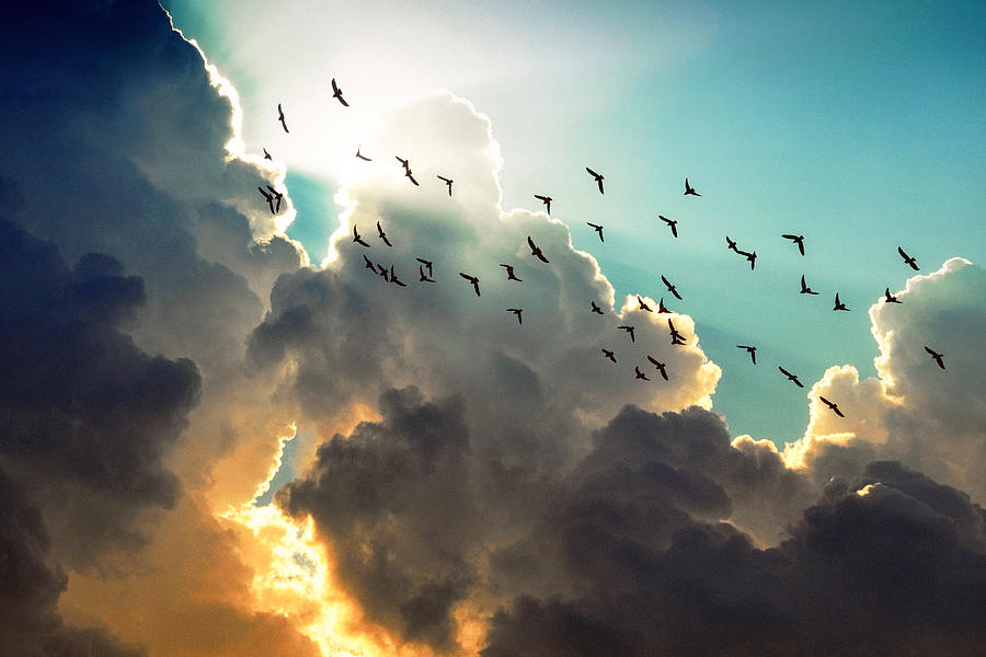 Uplifting Photograph - Clouds And Birds by Dorothy Walker