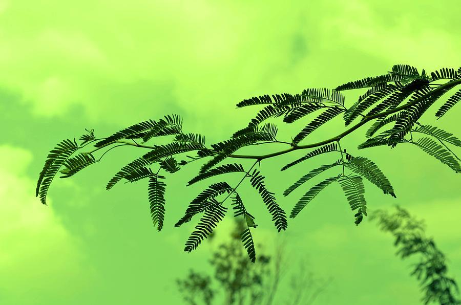 Green Photograph - Cloudy Green Nature by Deepti Chahar