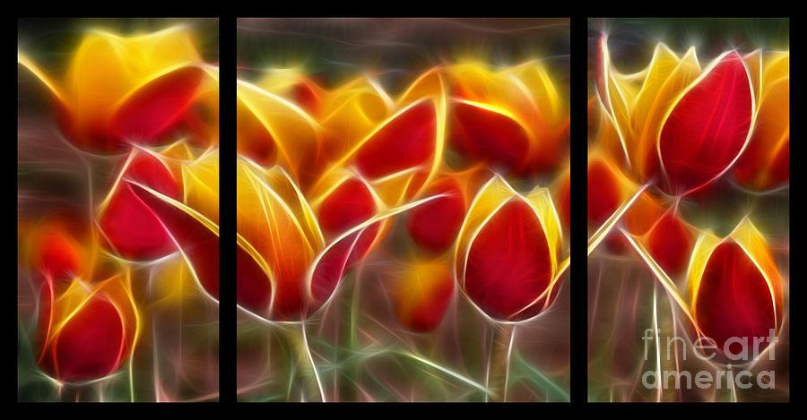Tulips Digital Art - Cluisiana Tulips Triptych  by Peter Piatt