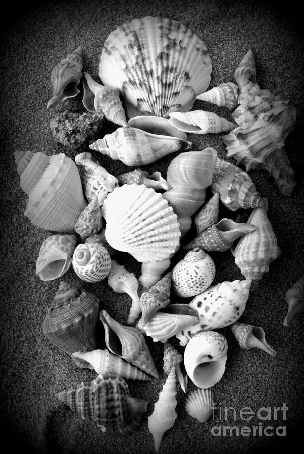 Shells Photograph - Cluster Of Shells by Diane Reed
