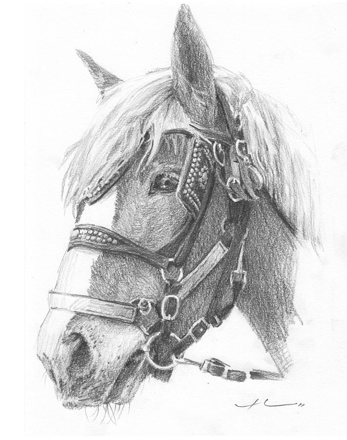 Clydesdale Horse Pencil_portrait Drawing by Mike Theuer
