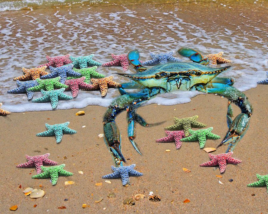 Blue Digital Art - Coastal Crab Collection by Betsy Knapp
