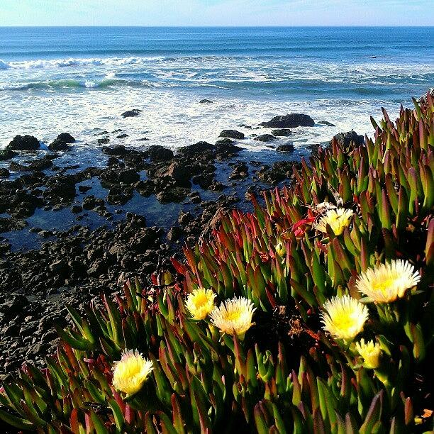 Scenery Photograph - Coastal Flowers by CML Brown