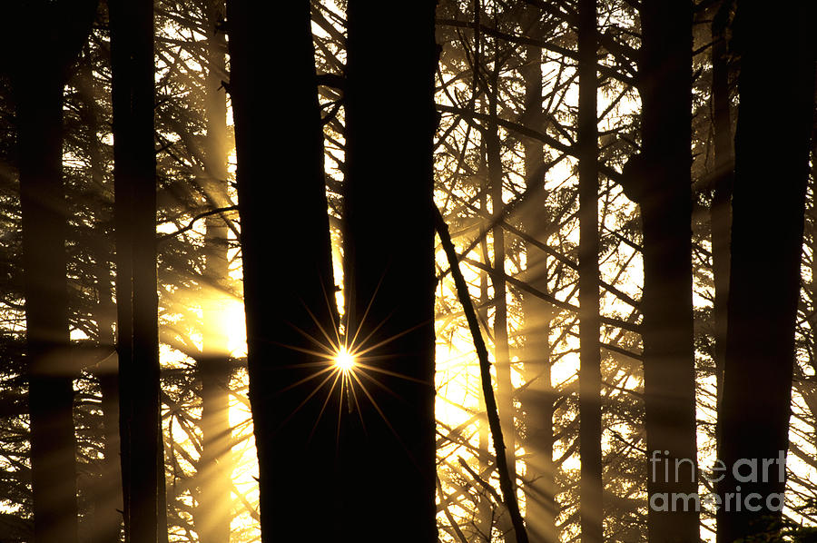 Coastal Forest Photograph - Coastal Forest by Art Wolfe