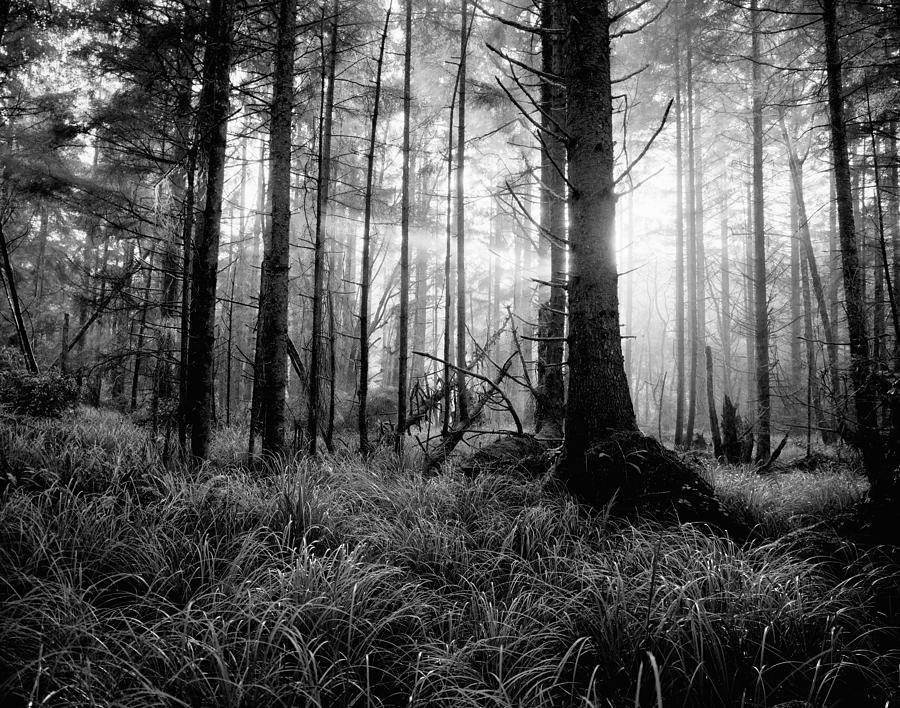 Landscape photograph coastal forest black and white by john wolf