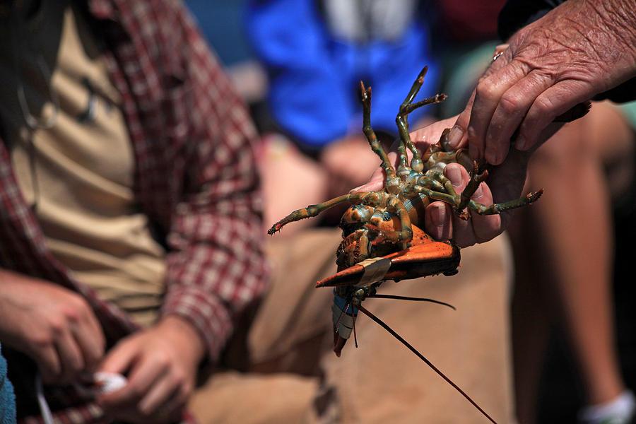 Coastal Photograph - Coastal Maine Is Lobster by Karol Livote