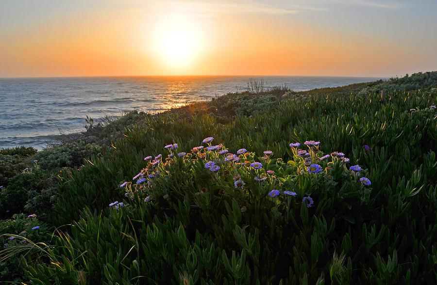 Cambria Photograph - Coastal Sunset by Lynn Bauer