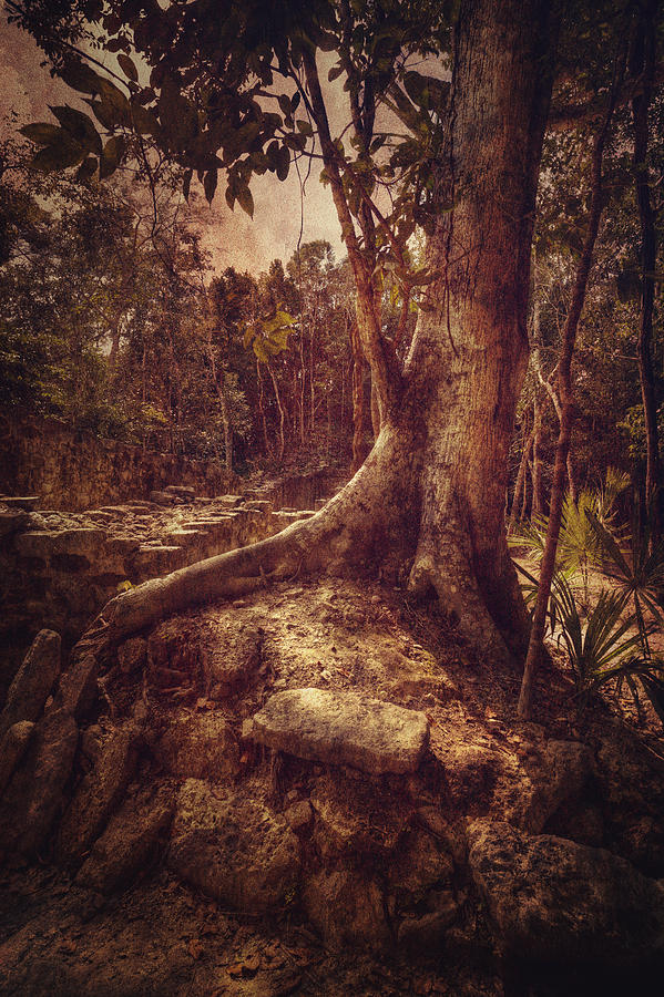Tree Photograph - Coba Tree by Stuart Deacon